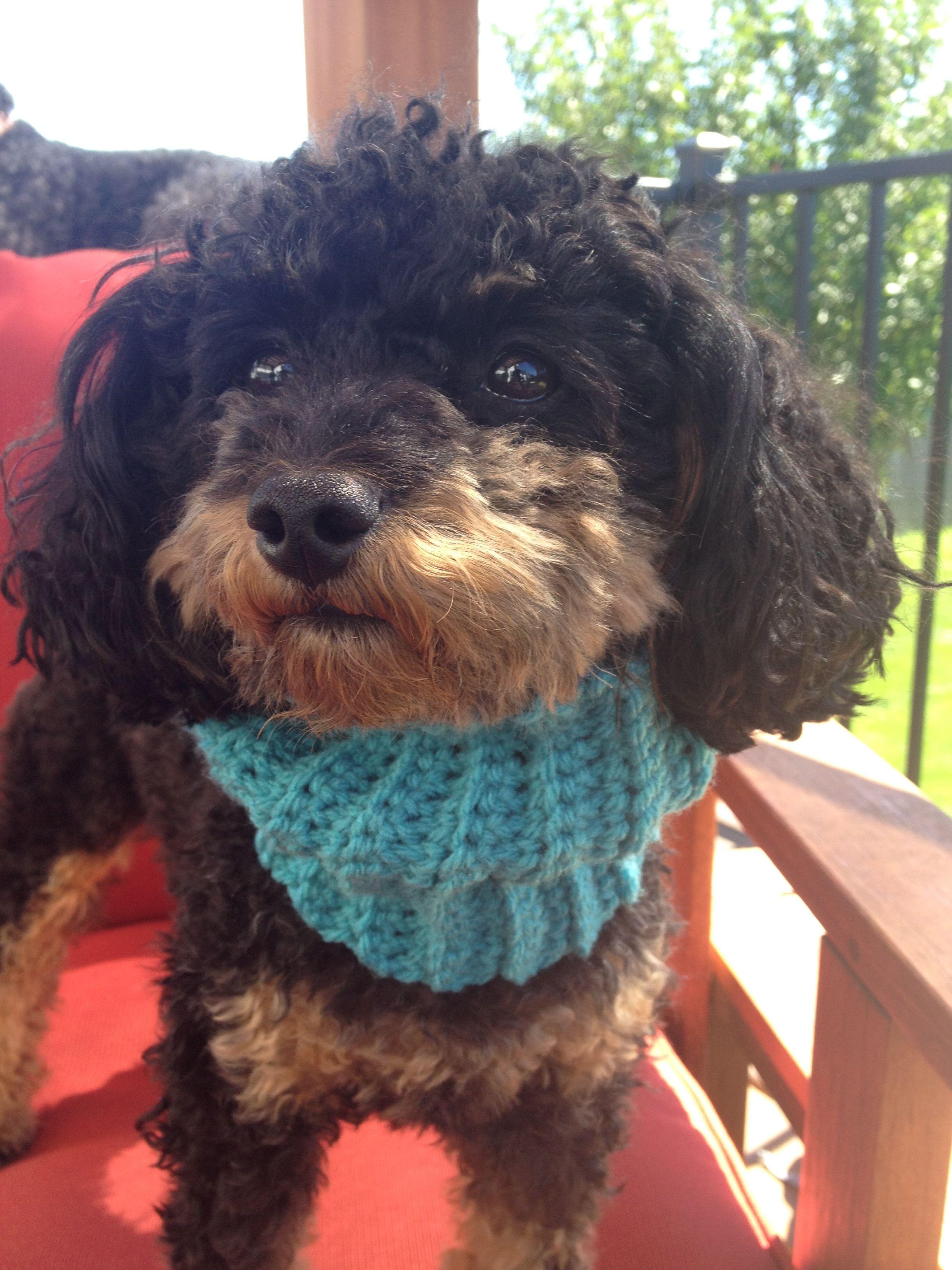 Dog Cowl Knitting Pattern : free pattern Knit and Crochet
